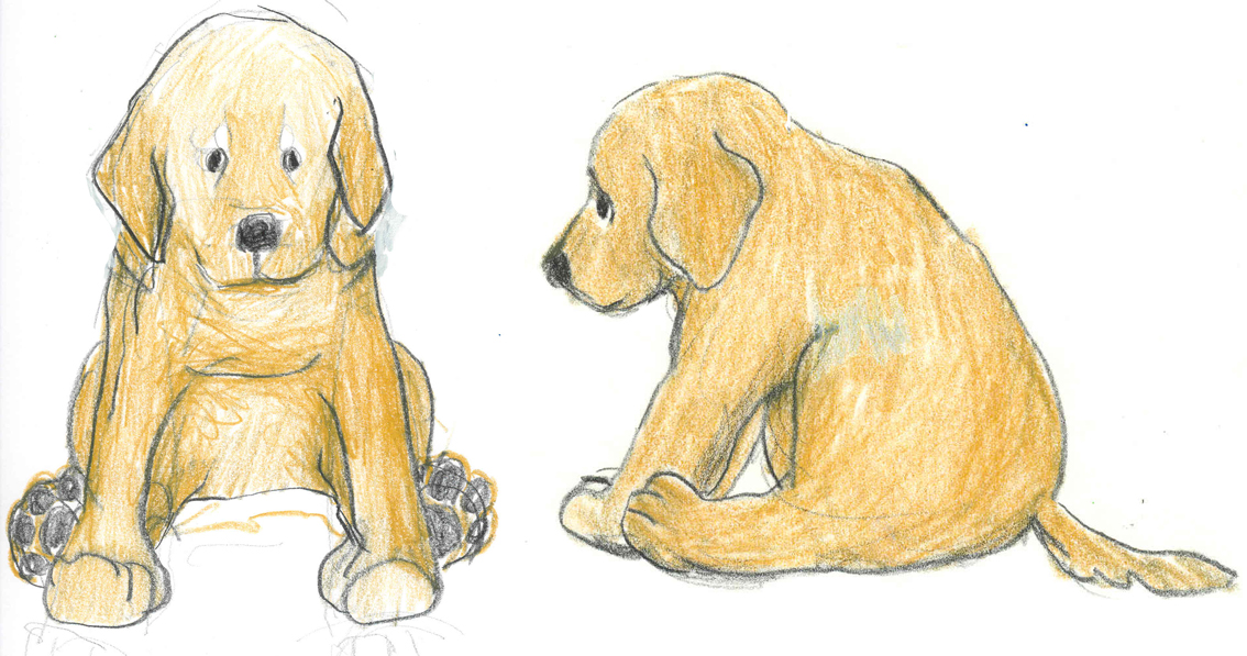 Gosig Golden Puppy main sketches